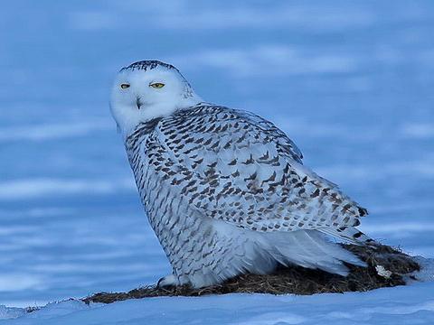 Audubon Science & the Christmas Bird Count